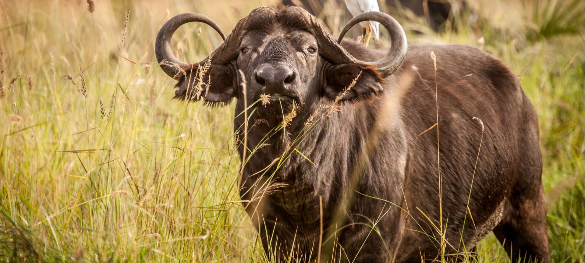 the big five zululand reservations